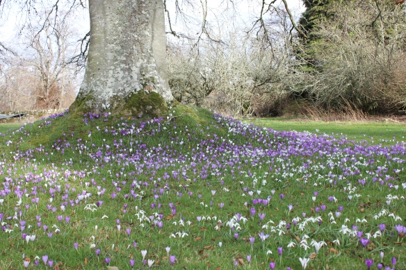 I love crocuses and snow drops are so beautiful!